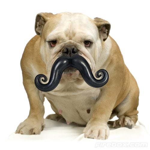 humunga-stache-for-dog