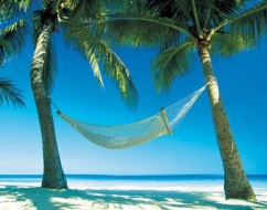 beach-palm-trees-hammock