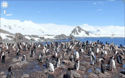 google-street-view-antarctica-penguins