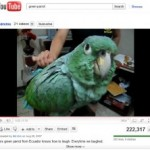 Google Improves YouTube By Buying A Parrot!