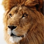 Lion In The Spotlight: Apple To Offer Lion On USB Drives From August